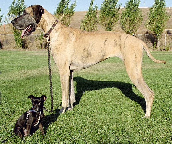 Big_and_little_dog_1